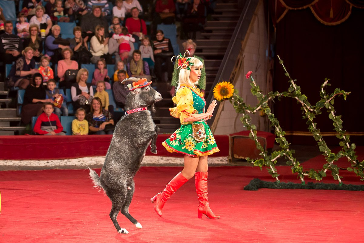 У місті на Волині заборонили пересувні цирки