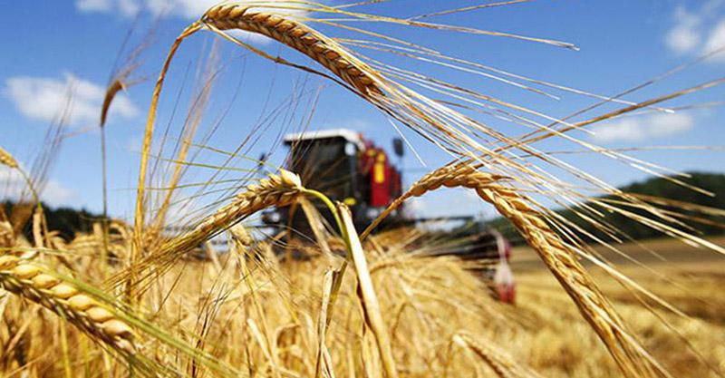 На Волині в ході операції «Урожай» фіскали проводять рейди та обстеження сільськогосподарських підприємств