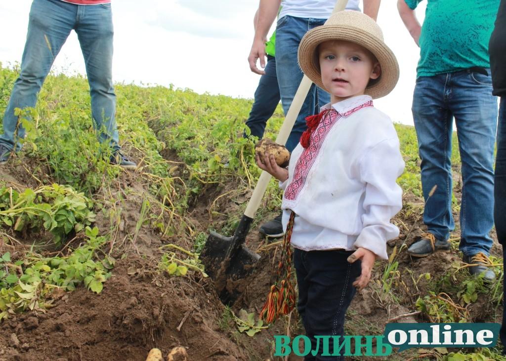 70 сортів картоплі від ранньої до пізньої – у ФГ «Шегедин» відбувся День поля. ФОТО