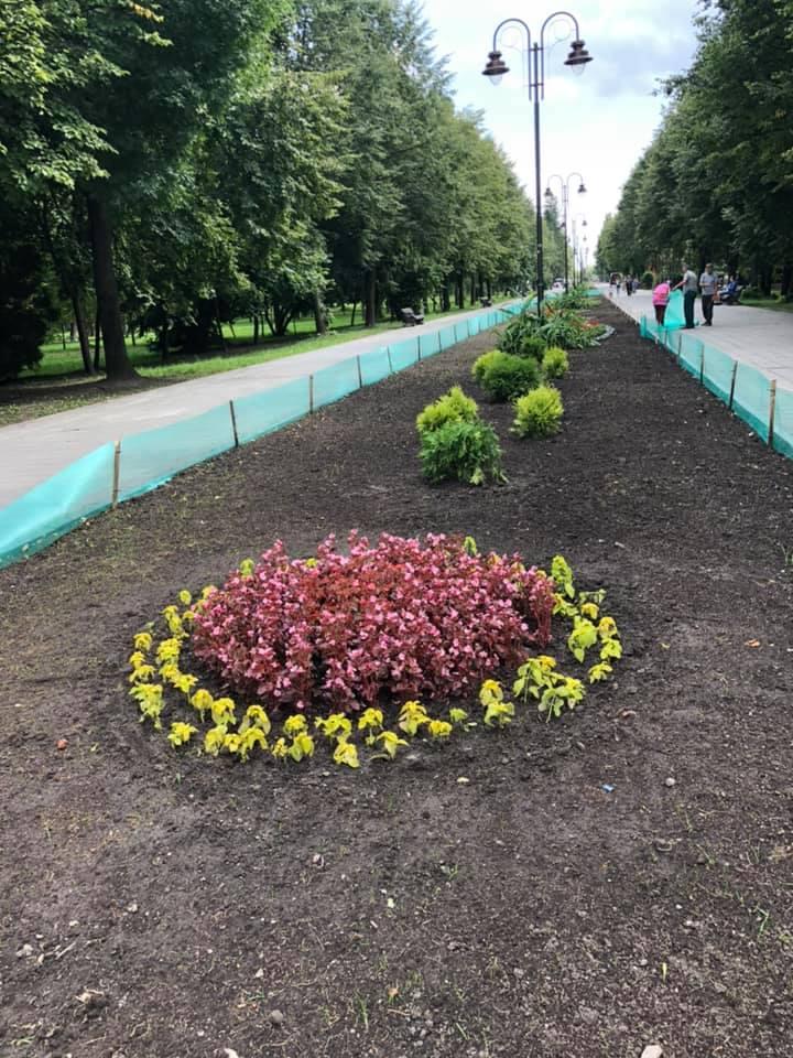 У центральному парку Луцька оновлюють озеленення. ФОТО