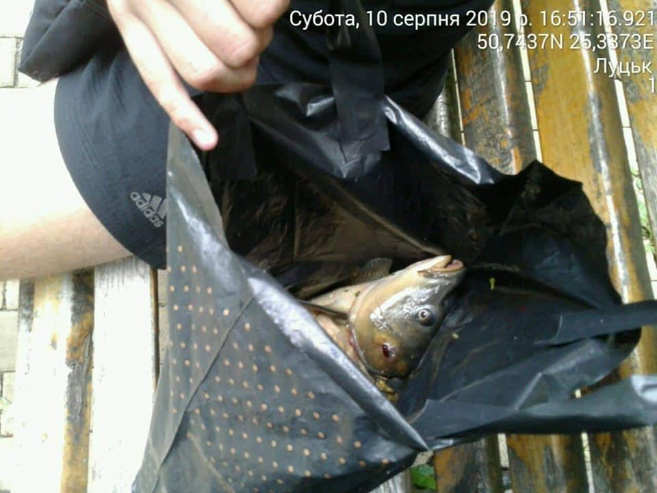 У Луцьку виявили рибалку, котрий ловив рибу у Центральному парку культури та відпочинку імені Лесі Українки. ФОТО