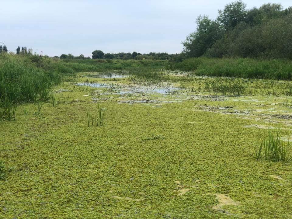На Волині річка перетворюється на болото. ФОТО