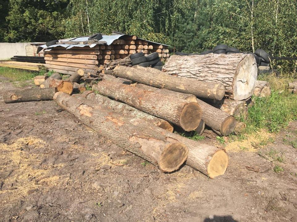 На Волині вилучили понад півсотні незаконно зрубаних дубів