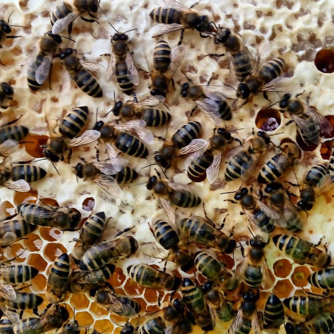 На Волині працюють над нарощенням медових потужностей