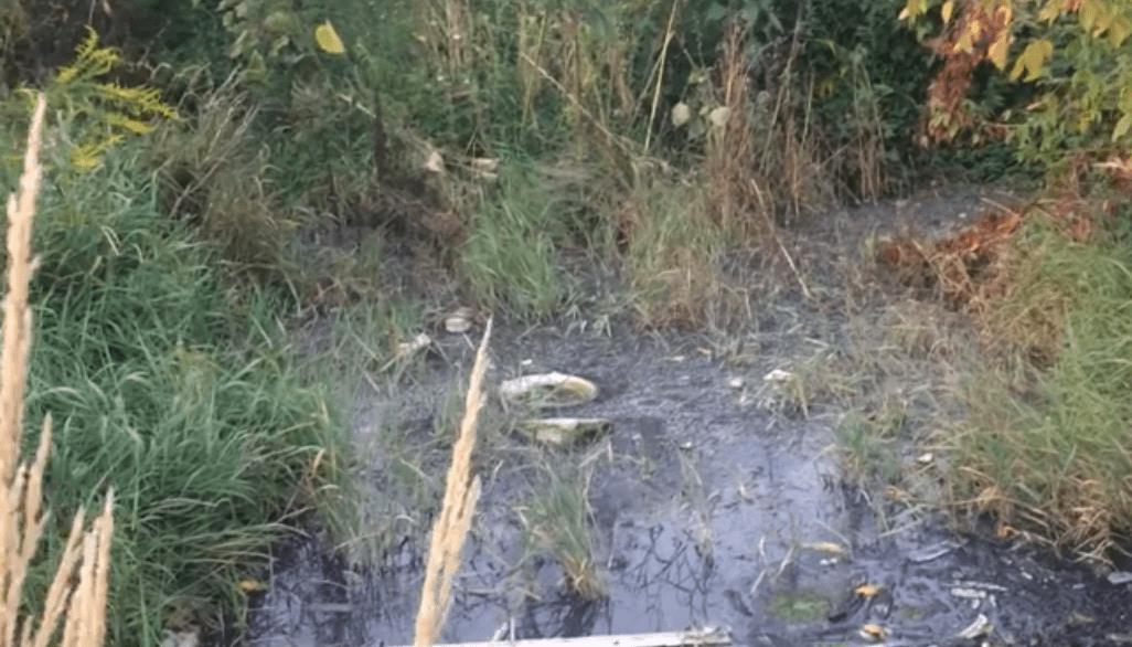 У Луцьку з каналізаційного люка через верх витікають відходи. ВІДЕО