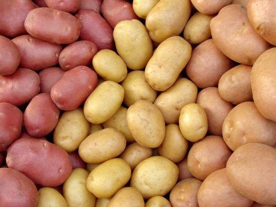 Імпорт картоплі в Україні виріс у 700 разів