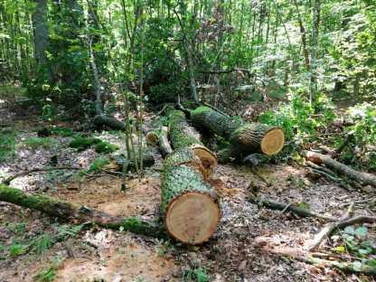 На Волині зловили крадіїв деревини