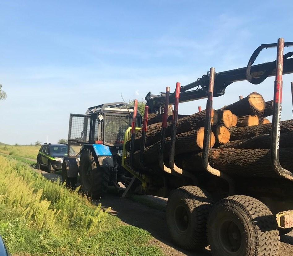 На Волині підприємство незаконно вирубувало ліс