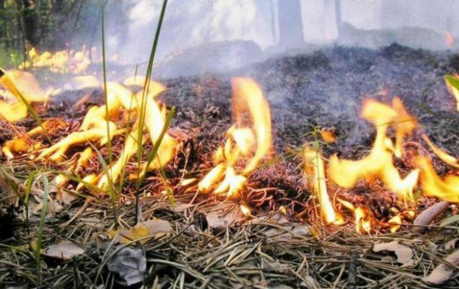 На Волині утримується найвищий клас пожежної небезпеки