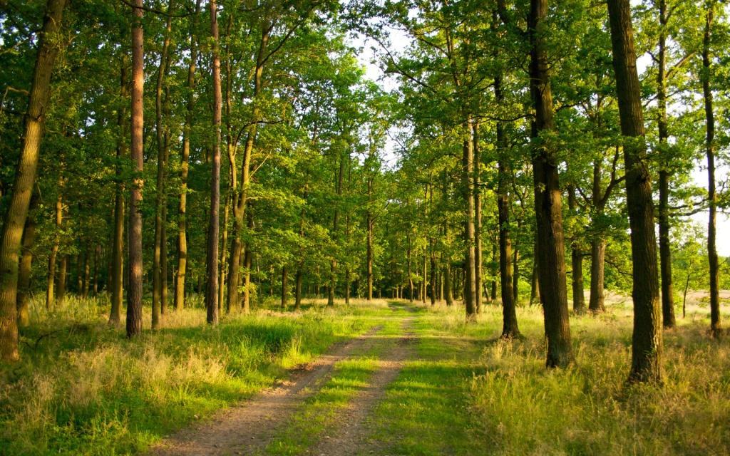 Як на Волині відновлюють ліс. ВІДЕО