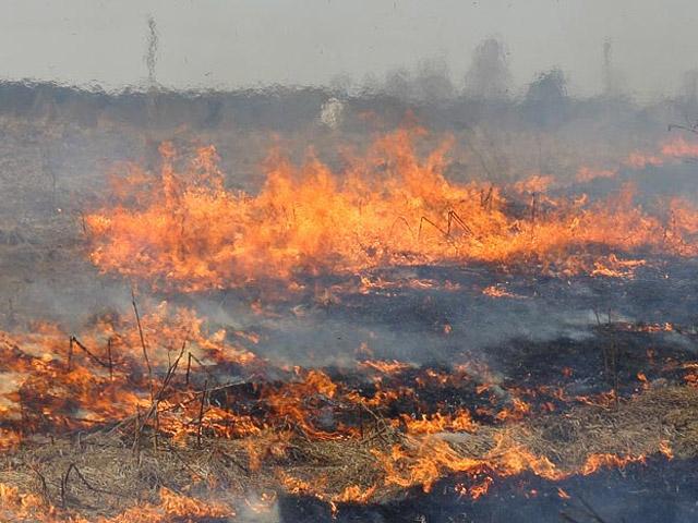 Під Луцьком виявили факти спалювання сухої рослинності
