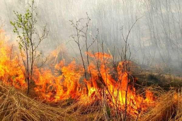 У Луцьку закликають не спалювати суху траву та листя