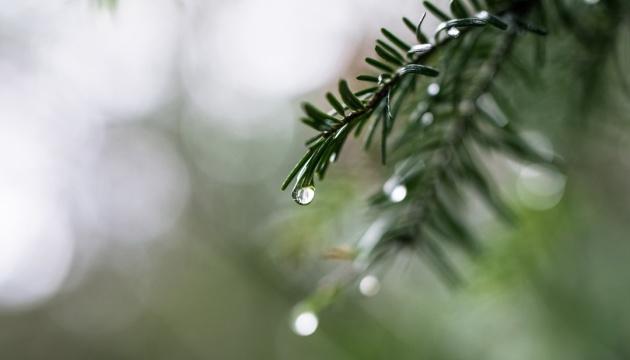 Дощі завтра накриють майже всю Україну