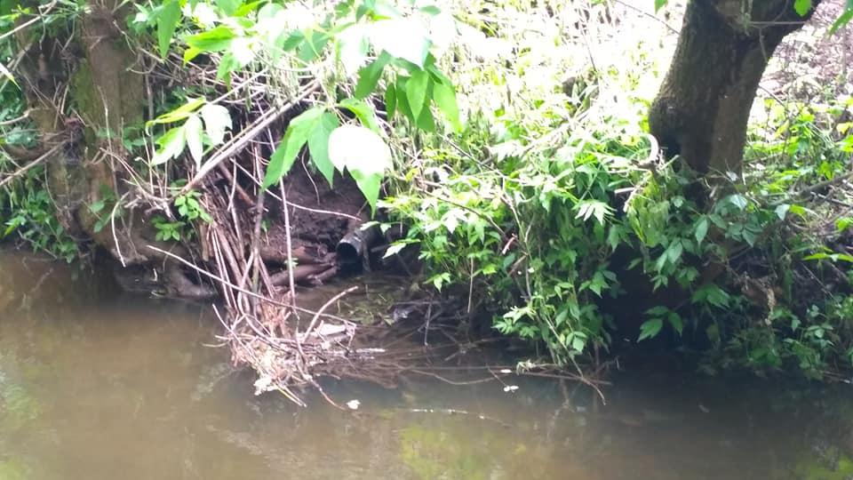 На Волині водночас очищають річку та зливають у неї нечистоти. ФОТО