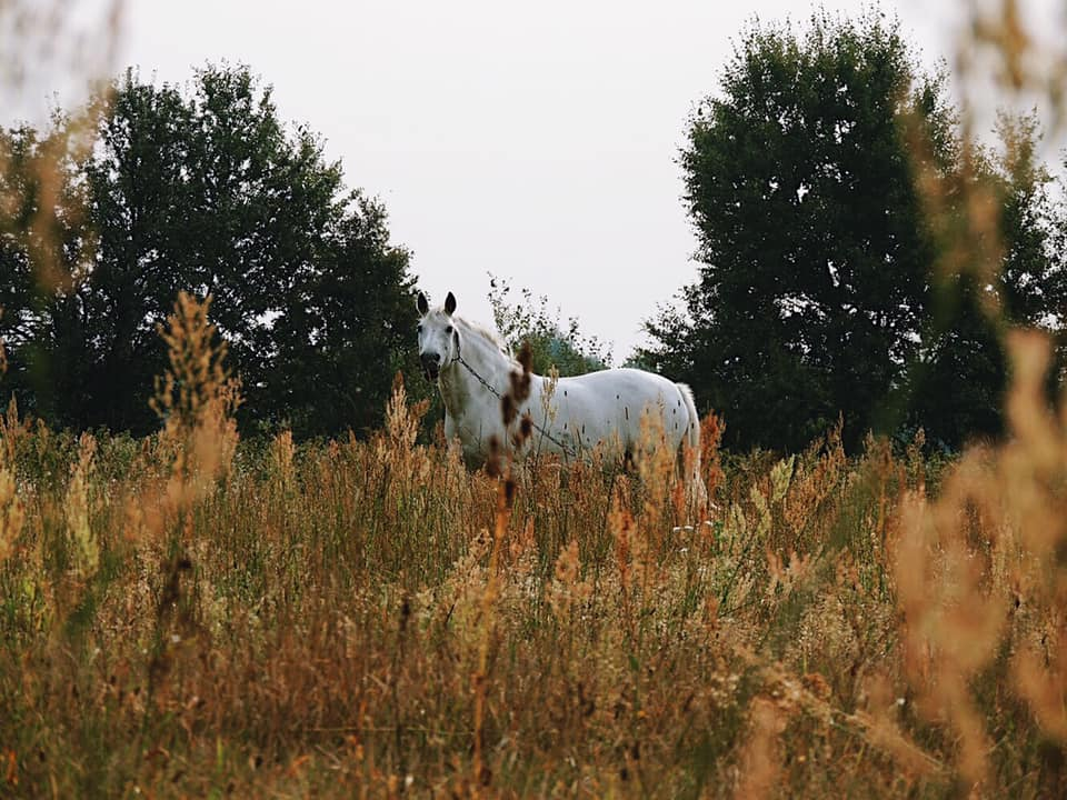 Дослідники показали красу волинського села. ФОТО