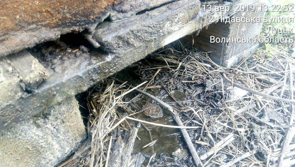 У Луцьку виявили залишки тваринного походження від яких поширюється ядучий сморід. ФОТО 18+