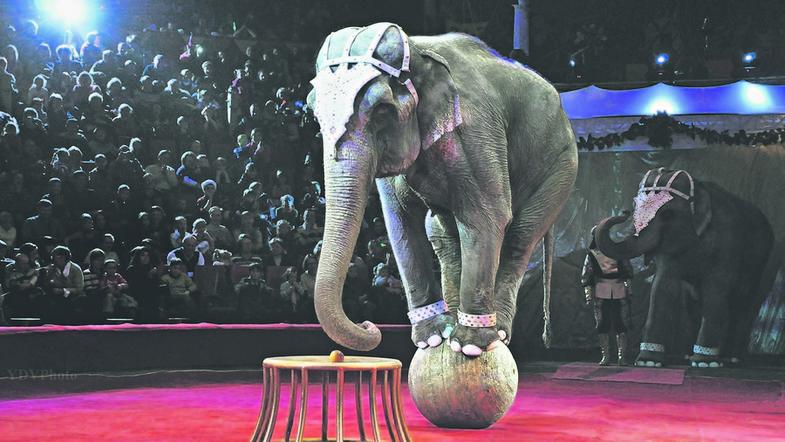 В українському місті суд заборонив стаціонарному цирку експлуатувати тварин