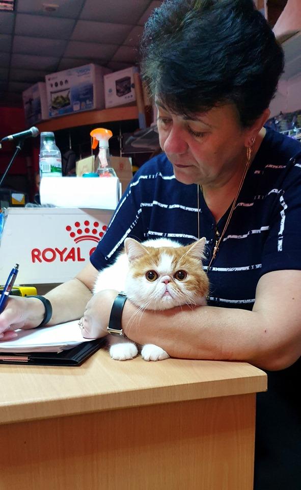 У Луцьку проходить виставка котів. ФОТО