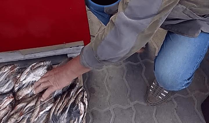 На Волині зафіксували 16 порушень вилову риби