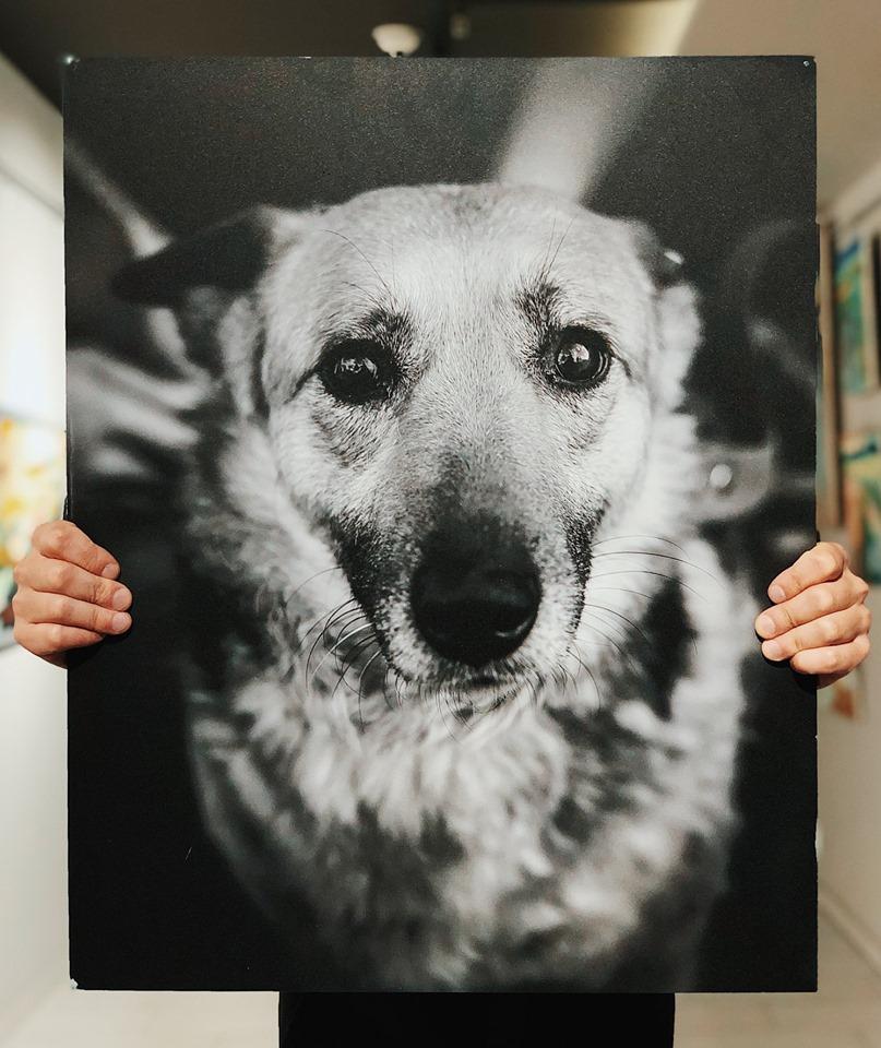 У Луцьку пройде фестиваль безпритульних тварин