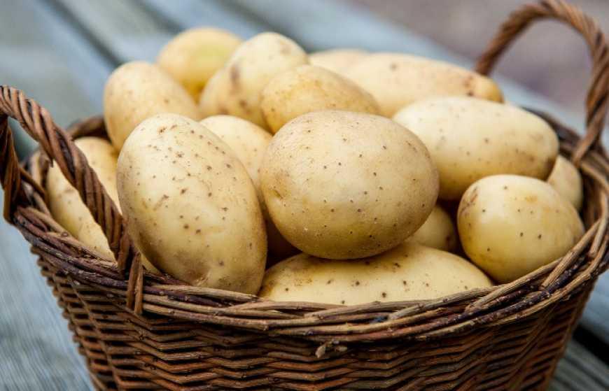 В Україні дешевшає картопля