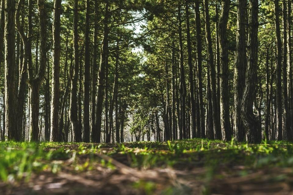 На Волині люди у лісі виявили смертельну знахідку. ФОТО