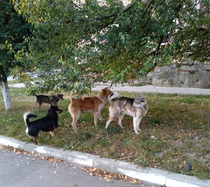 Лучанка скаржиться на безпритульних собак. ФОТО