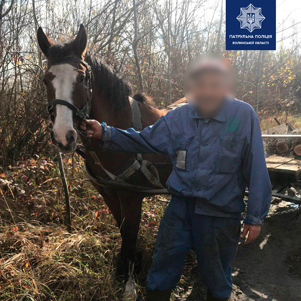 На Волині кінь біг посеред дороги без погонича. ФОТО