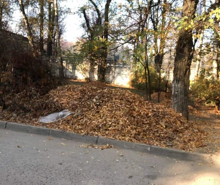У Луцьку чоловік біля будинку наскладав купу гілля та листя. ФОТО