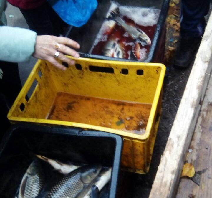 На Волині за тиждень вилучили понад 500 кілограмів незаконно виловленої риби