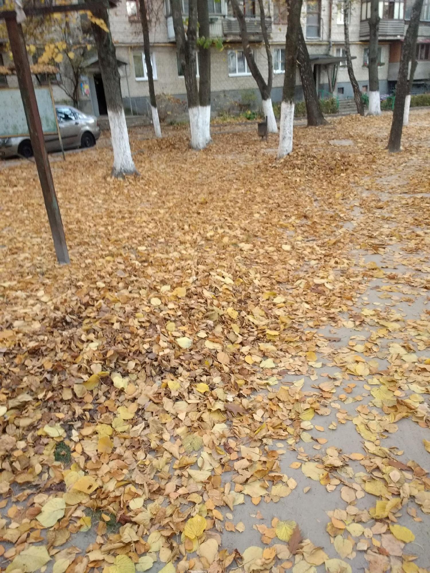 У Луцьку прибудинкову територію не прибирають від опалого листя