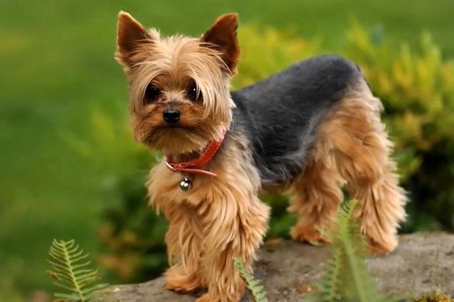 У місті на Волині розшукують собаку