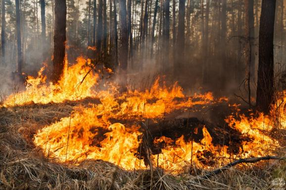 В Україні надзвичайний рівень пожежної небезпеки