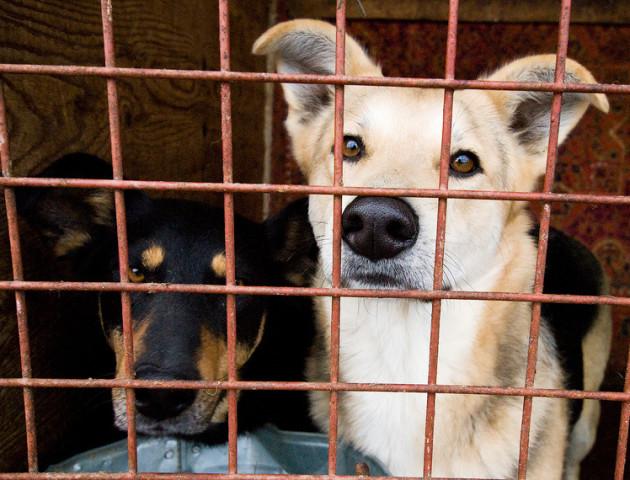 У вересні в Луцьку відловили 29 безпритульних тварин