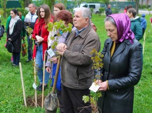 Лучан запрошують посадити клени в пам'ять про загиблих захисників