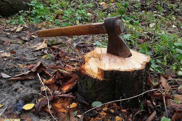 Волинянина підозрюють у незаконній рубці дерев на суму понад 215 тисяч гривень