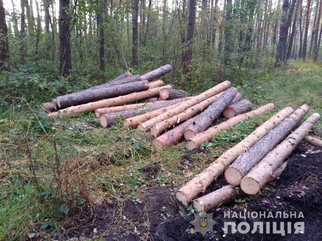 Волинянин незаконно вирубав 25 дерев