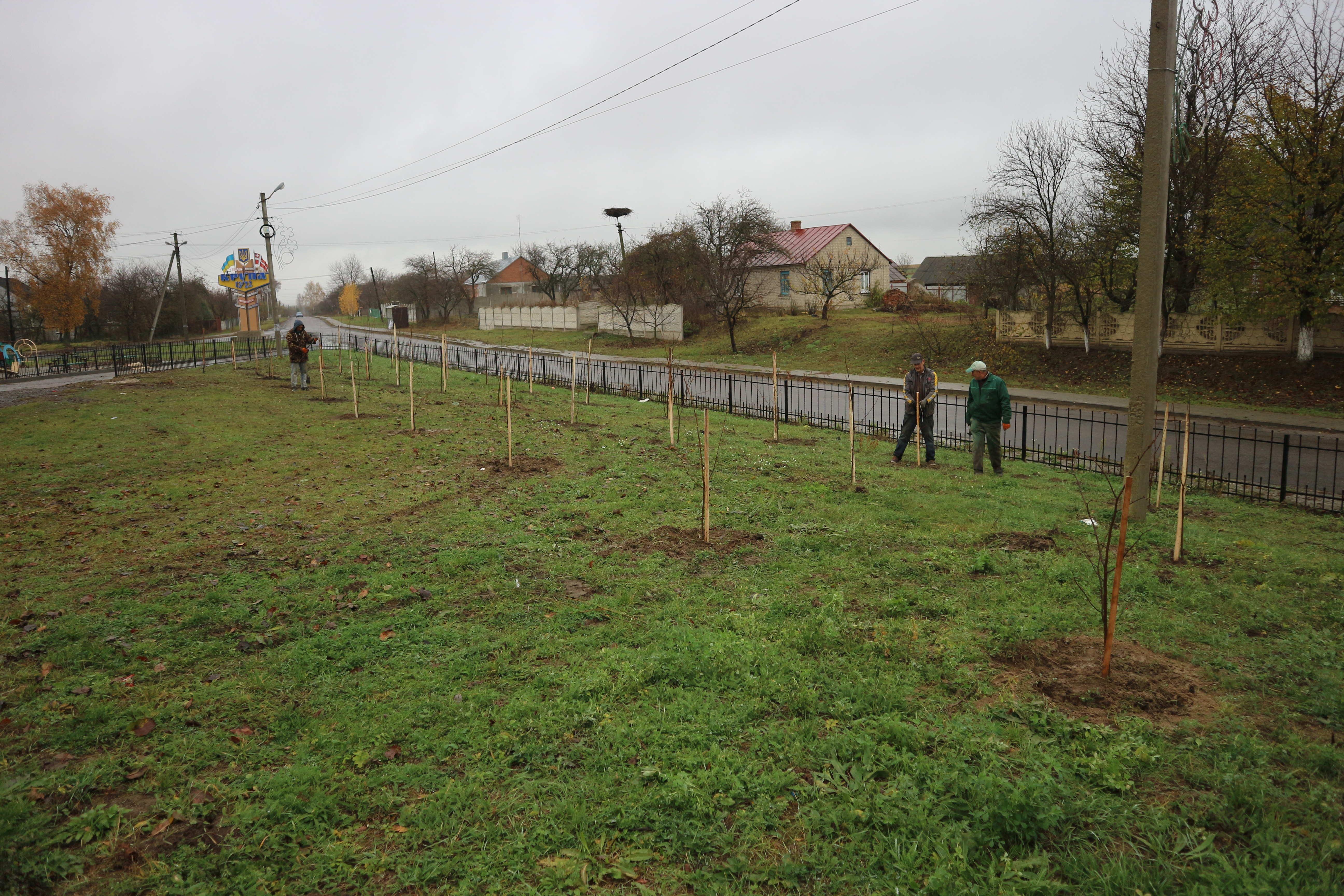 У селі на Волині побільшало зелених насаджень: висадили 70 дерев