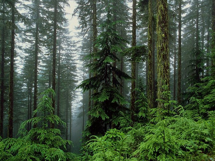 Спіймали волинянина, який незаконно вирубував ліси