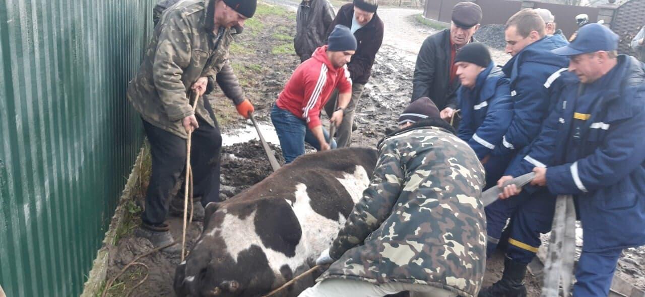 На Волині рятувальники дістали із ями корову