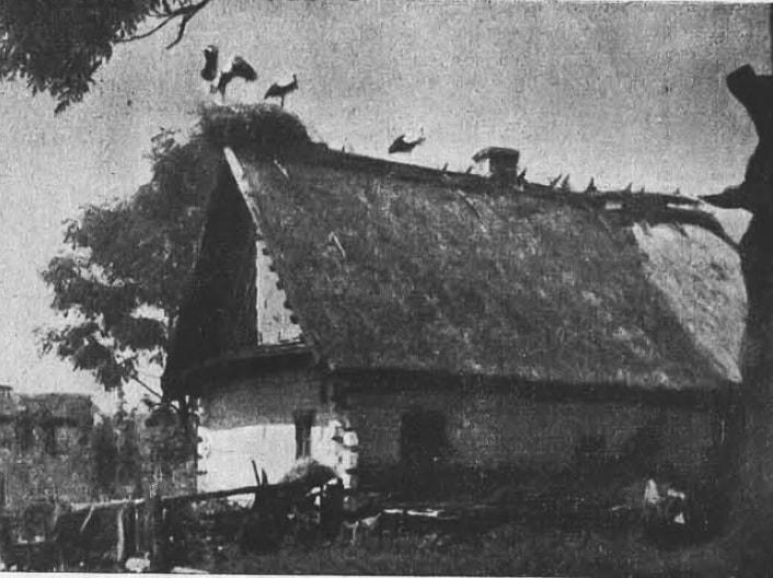 Показали, як виглядало село на Волині 80 років тому. ФОТО