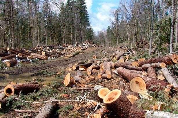 На Волині обговорили проблемні питання протидії незаконним порубкам лісу