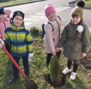 Як учні волинської школи допомагали лісівникам туї висаджувати