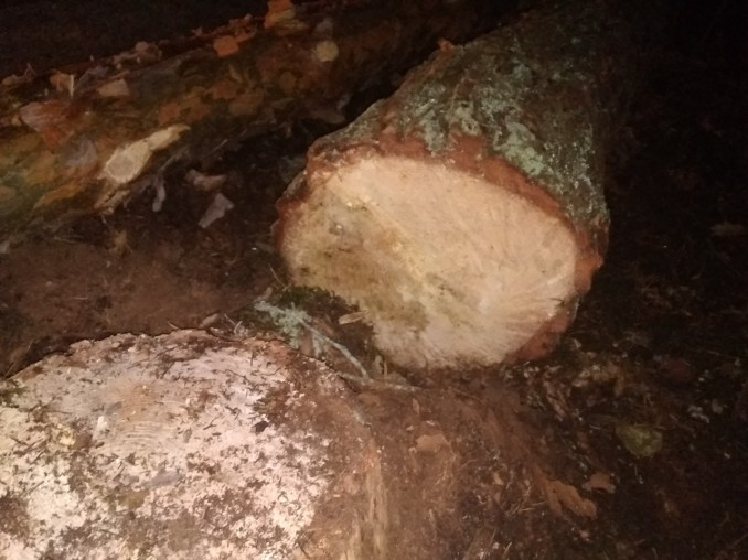 Затримали волинян, що незаконно вирубували ліс