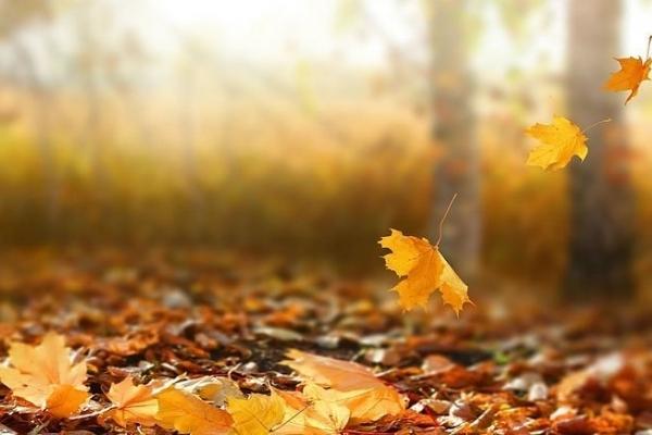 В Україні продовжиться зниження температури: погода 17 листопада