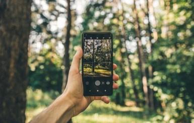 Волиняни можуть контролювати незаконну вирубку лісів онлайн