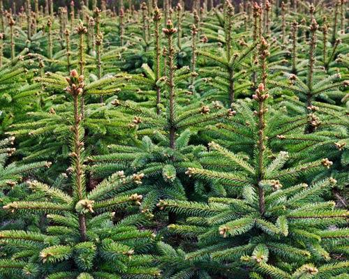 Суд покарав групу осіб, що незаконно вирубували ліс на Волині