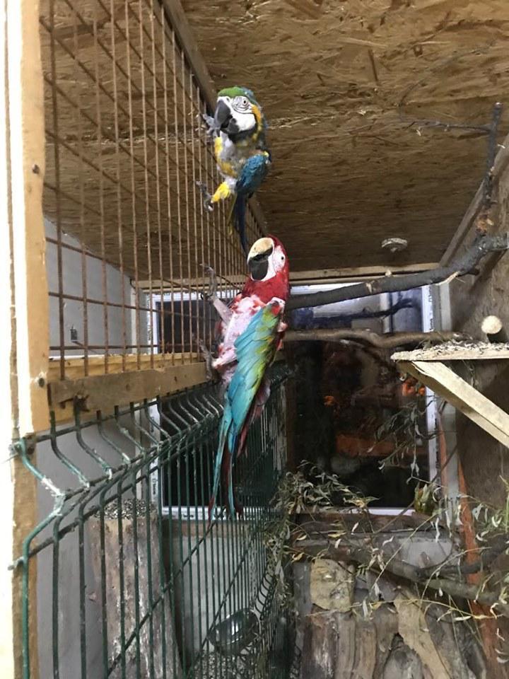 Знайшли папуг Луцького зоопарку, які нещодавно зникли