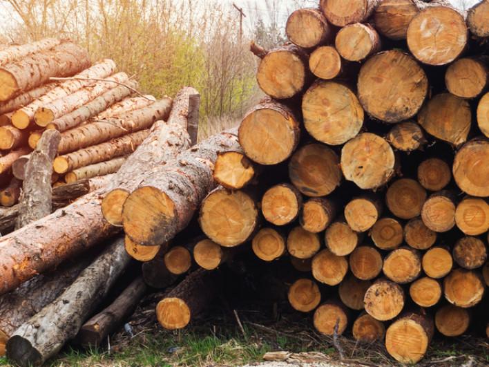 Як волинянам дізнатися ціни на деревину онлайн