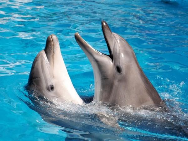 За 2,5 роки в окупованому Криму на берег викинуло 1200 дельфінів
